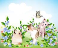 Gatitos y mariposa Foto de archivo libre de regalías