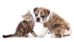 Gatitos y perrito Imagenes de archivo