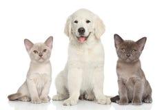 Gatitos y perrito Imagen de archivo libre de regalías