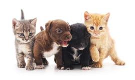 Gatitos y perritos Fotografía de archivo libre de regalías