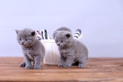 Gatitos y un cubo fotos de archivo