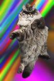 Gato à moda nos óculos de sol dança e salto Foto de Stock Royalty Free