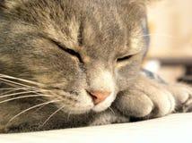 Gato #02 Fotografia de Stock Royalty Free