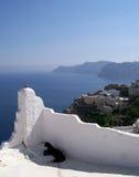 Gato 03 de Santorini Imagens de Stock Royalty Free