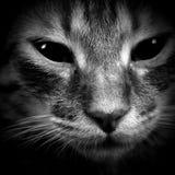 Gato Fotos de archivo libres de regalías