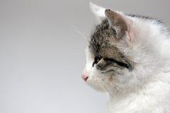 Gato Fotos de archivo