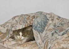 Gato. Imagem de Stock