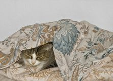 Gato. Imagen de archivo