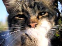 Gato 3 Foto de archivo libre de regalías