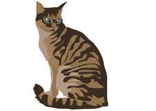 Gato Ilustración del Vector