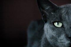 Gato Imagem de Stock Royalty Free