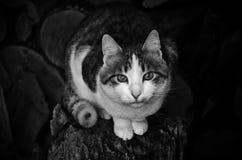 Gato Imagenes de archivo