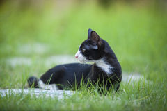 Gato Foto de Stock Royalty Free