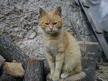 Gato 2 Foto de Stock