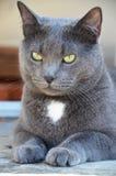 Gato Fotografia de Stock Royalty Free