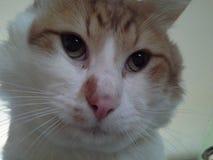 Gato Imagen de archivo