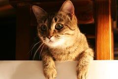 Gato 6 Imagen de archivo libre de regalías