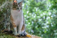 ¡Gato! Foto de archivo libre de regalías