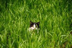Gato Fotografía de archivo libre de regalías