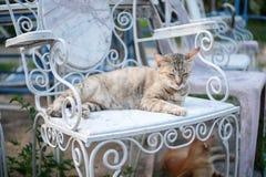 Gato Fotos de Stock Royalty Free