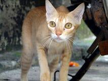 Gato 2 Imagen de archivo libre de regalías