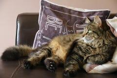 Gato Foto de archivo