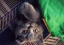 Gato Fotografía de archivo