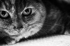 Gato fotos de stock royalty free