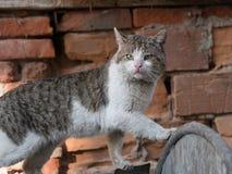 Gato abandonado que mira in camera Imagen de archivo libre de regalías