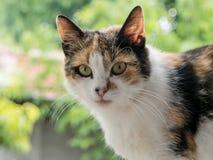 Gato abandonado que mira in camera Foto de archivo libre de regalías