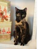 Gato abigarrado de la concha en un interior del ` s del Año Nuevo en la chimenea con los regalos de la Navidad Imagenes de archivo
