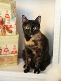 Gato abigarrado de la concha en un interior del ` s del Año Nuevo en la chimenea con los regalos de la Navidad Imagen de archivo