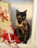 Gato abigarrado de la concha en un interior del ` s del Año Nuevo en la chimenea con los regalos y el juguete Santa Claus de la N Imagen de archivo libre de regalías