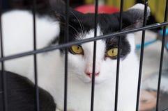 Gato abrigado Fotos de archivo libres de regalías