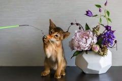 Gato Abyssinian com um vaso das flores Imagem de Stock Royalty Free