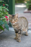 Gato acentuado Imágenes de archivo libres de regalías