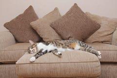 Gato acogedor del sofá Imágenes de archivo libres de regalías