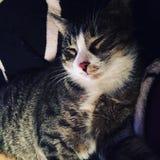 Gato acolhedor Imagem de Stock Royalty Free
