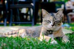 Gato adorável bonito da cor do leopardo que senta-se na grama e no sono fotografia de stock