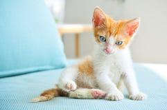 Gato adorável do bebê com olhos azuis Fotos de Stock Royalty Free