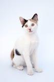Gato adorable Fotografía de archivo