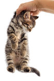 Gato adorable Imagen de archivo