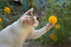 Gato adorable que juega con la flor Fotografía de archivo