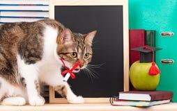 Gato adulto Foto de archivo libre de regalías