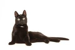 Gato adulto negro, mintiendo en la sublevación del piso para sentarse para arriba haciendo frente a la cámara Imagen de archivo libre de regalías