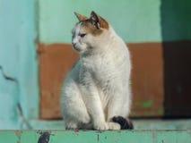 Gato adulto serio que mira en alguna parte Fotografía de archivo libre de regalías
