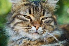 Gato afirmado Fotos de Stock