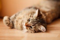 Gato agradável Foto de Stock