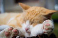 Gato agradável que relaxa em uma parte de madeira no jardim enorme Imagem de Stock