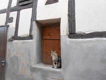 Gato agrad?vel em casa, em Alsácia bonita, França fotografia de stock royalty free